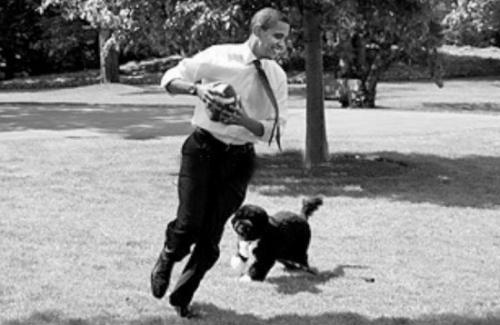 奥巴马的葡萄牙水犬波,是参议员爱德华・肯尼迪送的礼物。