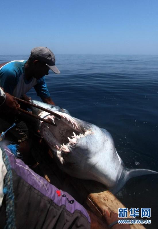 (XHDW)(9)印尼传统捕鲸村渐无鲸可捕