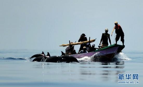(国际)(2)印尼传统捕鲸村渐无鲸可捕