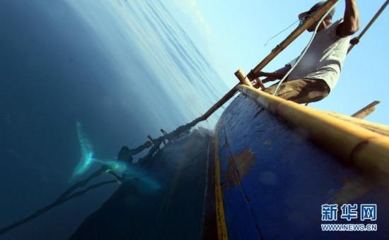(XHDW)(2)印尼传统捕鲸村渐无鲸可捕