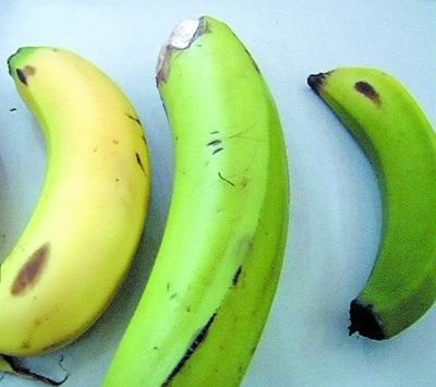 绿香蕉催熟