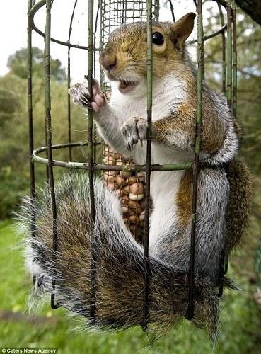 小松鼠偷吃鸟食被困