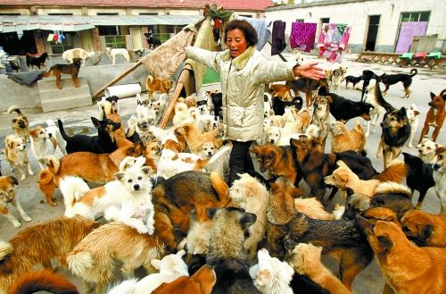 500多只流浪狗,她都能叫出名字
