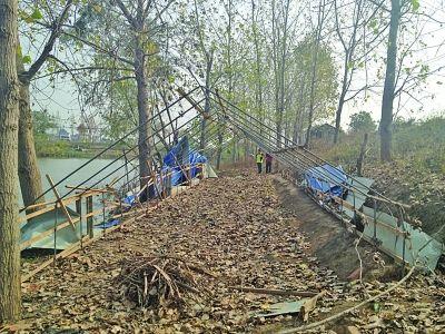 河堤上的鸡舍已拆除。曹卢杰 摄