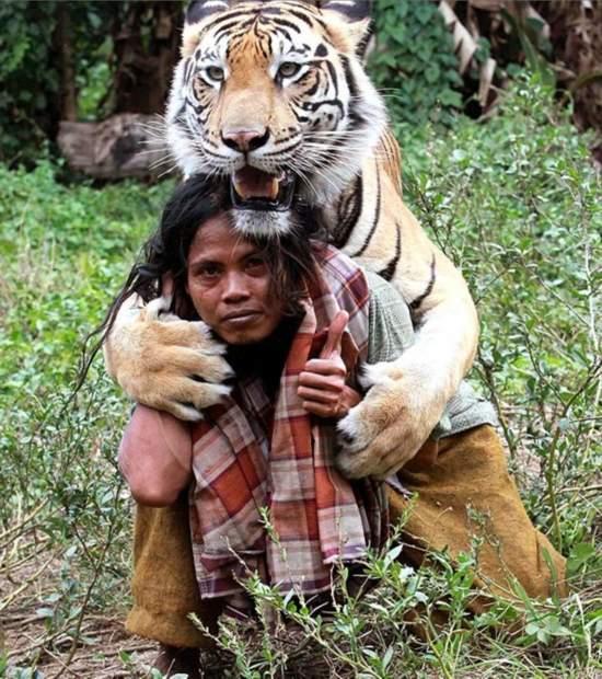 印尼男子与猛虎做朋友