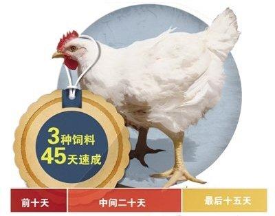 """揭秘""""速生雞"""":一隻雞吃18種抗生素 40天長5斤"""