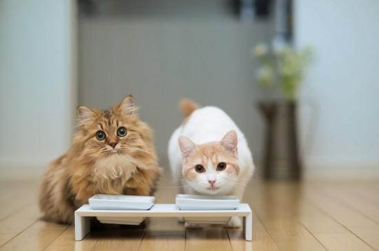 动物摄影:世界上最萌的小猫