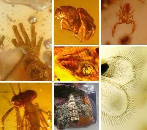 动物 万年/据国外媒体报道,琥珀是一种树液化石,但当黏稠的树液形成时可...