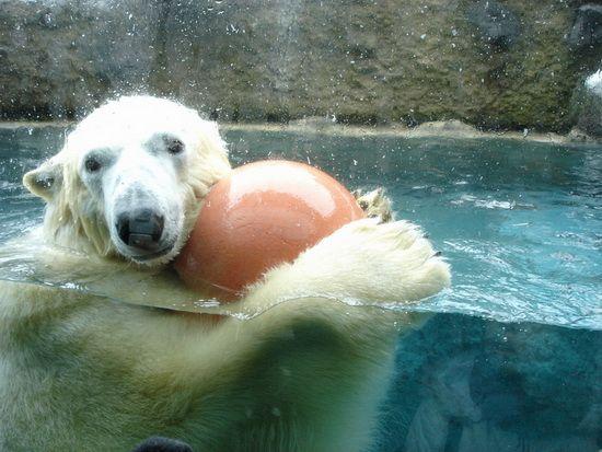 海豹等动物都可以近距离多角度的