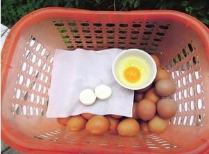 鸡蛋只有蛋白没有蛋黄无核蛋几率小最好别食用