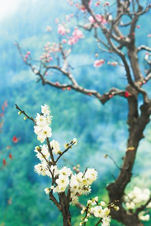 石家庄市植物园高清图片
