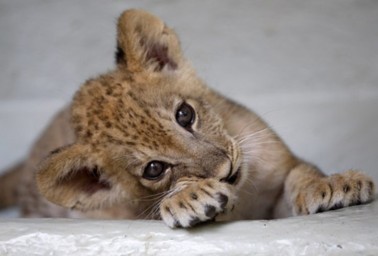 最可爱的动物宝宝【21】