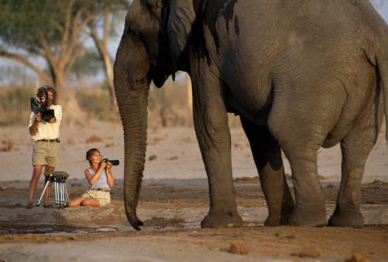 著名的野生动物摄影师兼国家地理驻会探险家