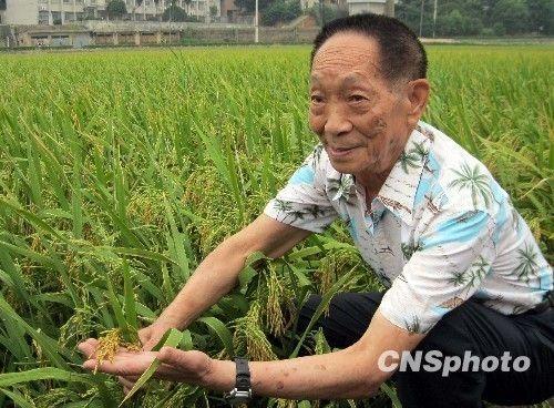 印度农民稻米单产创世界纪录袁隆平批吹牛皮