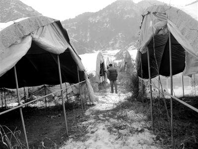 温家宝/1月29日,偏桥村的蘑菇大棚,种植设备已被撤离,开春能不能种...