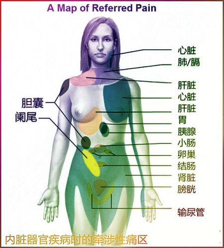 内脏器官对应疼痛图走红 被封自诊宝典--时尚