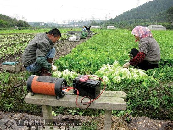 """60多对夫妻开发""""幸福农场"""" 种菜一两年挣七八万"""