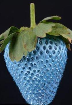 """蓝色草莓、银色苹果 可食用喷漆为盘中餐""""美容"""""""