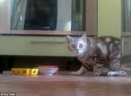 """猫咪发现自己遭到主人""""偷拍"""""""
