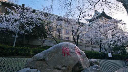 武汉大学的樱花美景