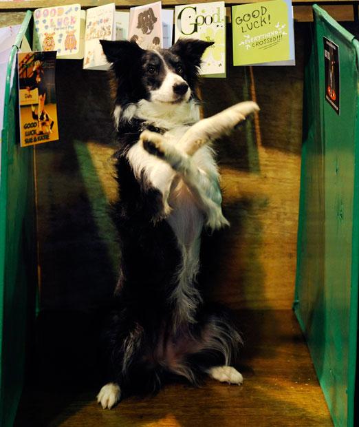 全球狗狗盛会 2013英国赛狗会