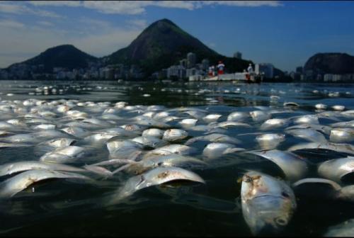 死鱼飘在计划举办赛艇比赛的罗德里戈湖中