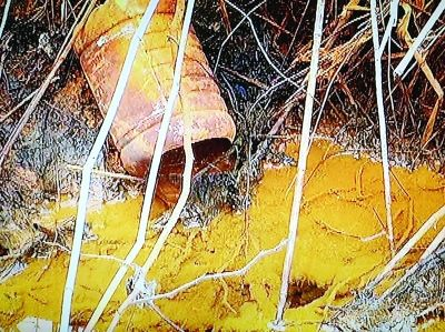 污染企業排出黃色的污水。