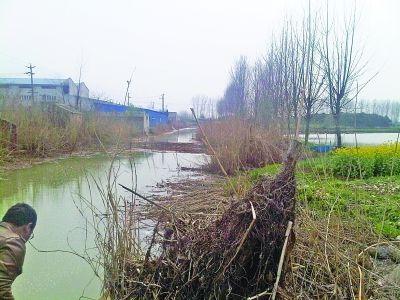 附近一條河流河水呈墨綠色。
