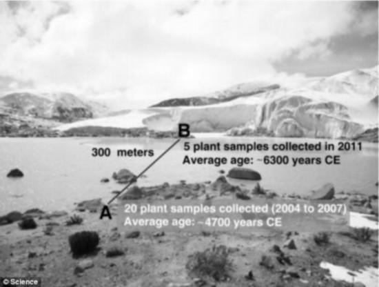 该科研组还绘制了一张图表,用来展示正在以前是冰川的地方出现的植物