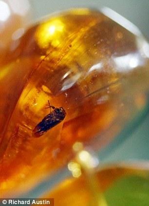 罕见蚊子项链琥珀4000万年前远古植物夏季除动物包裹有哪些图片