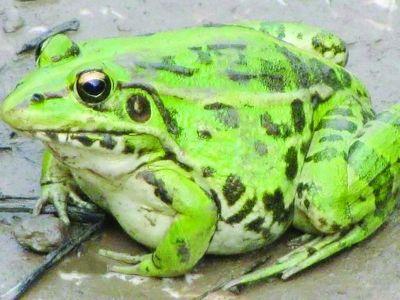 是国家三级保护动物,捕猎超过20只就构成非法捕猎罪.4月16日,三