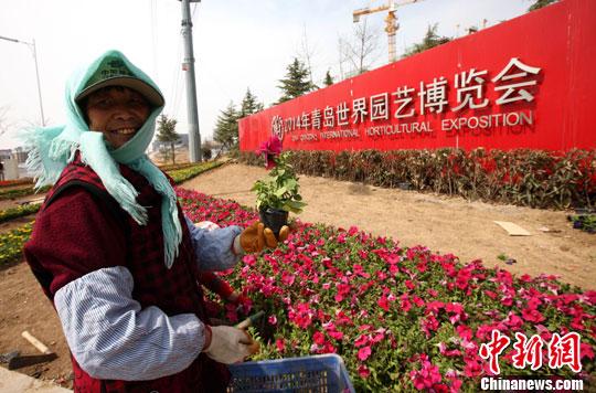 青岛世园会鲜花盛开 场馆建设初具规模