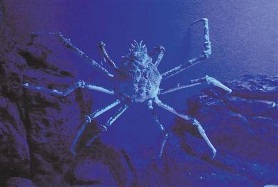 海底巨型蜘蛛-南宁 五一 出游手册 绿城景点玩不停图片