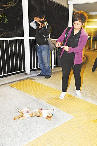 """香港现爆肚猫尸疑遭虐杀警方追缉""""猫杀手"""""""
