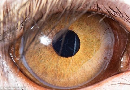 仟零数佰怪的眼睛:暹罗猫眼睛似月光珍石