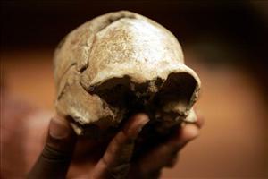 环球网综合报道】据美国Newser新闻网5月4日报道,肯尼亚近日挖掘出了一些动物的骨头,这些骨头被看成是原始人类进行捕猎活动的证据,其表明早前的人类家庭喜欢吃羚羊的大脑和肉。