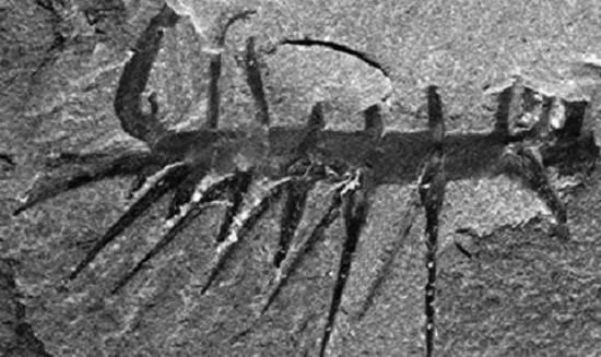 3种史前动物 水龙兽是已灭绝的爬行动物