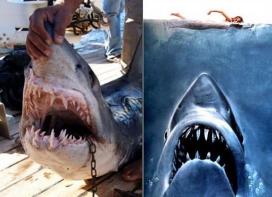全球动物袭击游客的恐怖瞬间