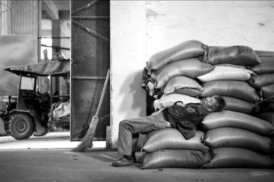 5月24日,湖南益阳山岭米厂一名工人躺在粮堆上休息。此次镉超标事件重创湖南众多大米加工企业。新华社发