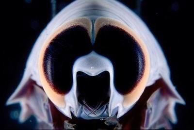 有意思的生物[组图]