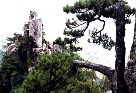 山和松树简笔画
