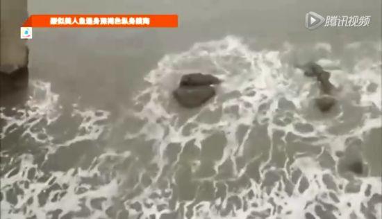 美人鱼/疑似美人鱼通身深褐色纵身跳海