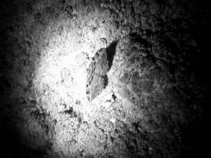 大家一起来看看,这是蛾子还是蝴蝶?这张照片就是江苏高考材料作文原文作者当年在山洞探险时拍下的。(