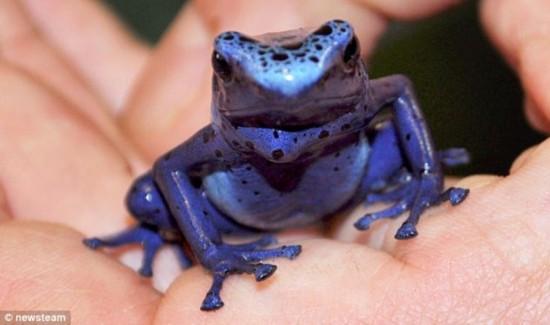 10剧蛙(图)