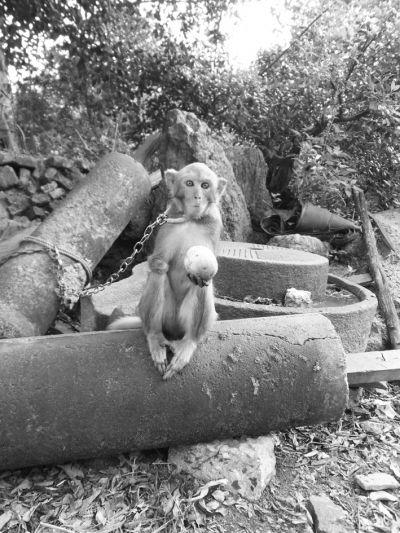 20年来,他倾力收养了40多种100多只小动物,耗尽家财.