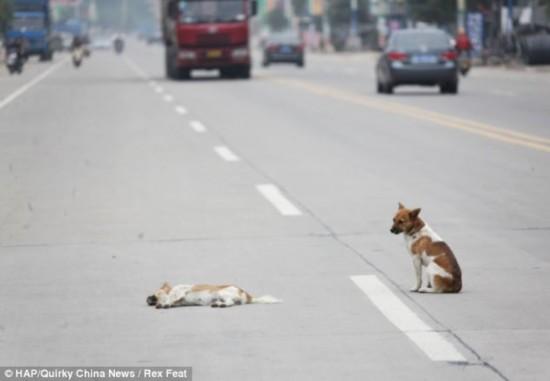 狗狗食品_爆笑看看猫儿是怎么欺负狗狗的视频