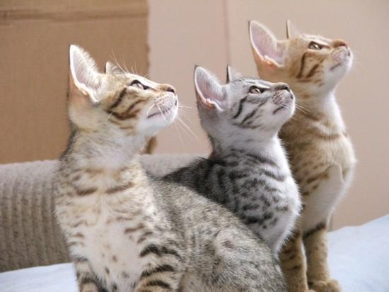 动物界三兄弟的幸福生活【30】