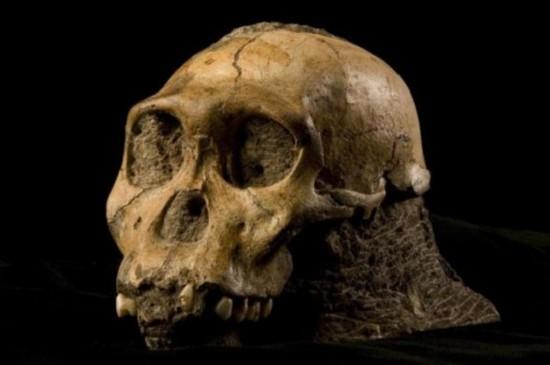 贵化石 可吞食恐龙史前巨蟒化石图片