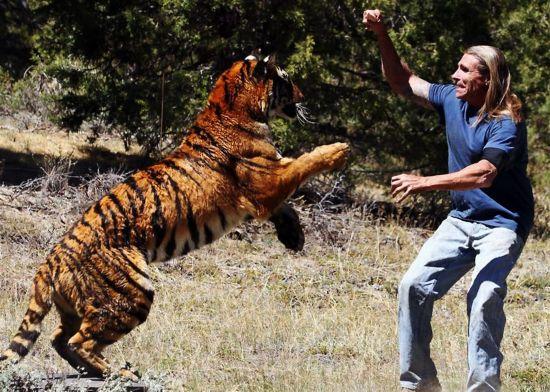 一只凶猛的老虎腾空跃起扑向一名
