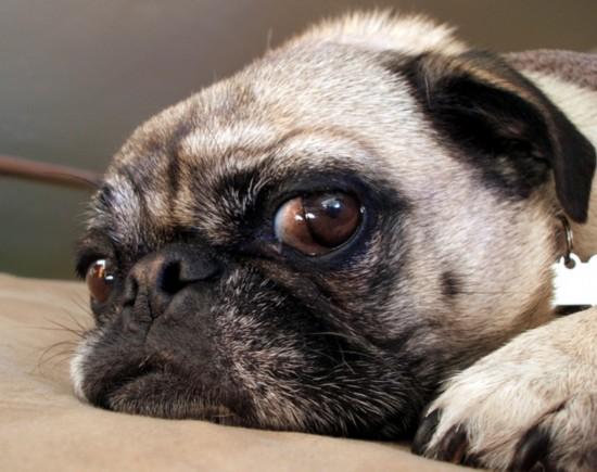 组图:令人无语!可爱动物斜眼表情大比拼